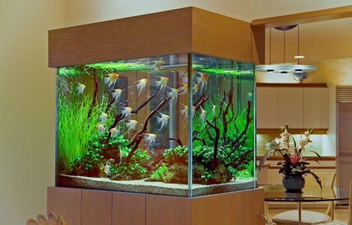 como abrir uma loja de aquários