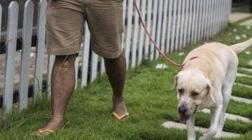 empresa de adestramento de cães