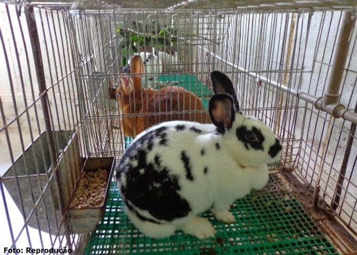 como criar coelhos