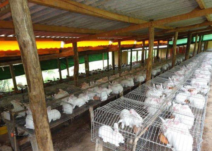 criar coelhos dá dinheiro