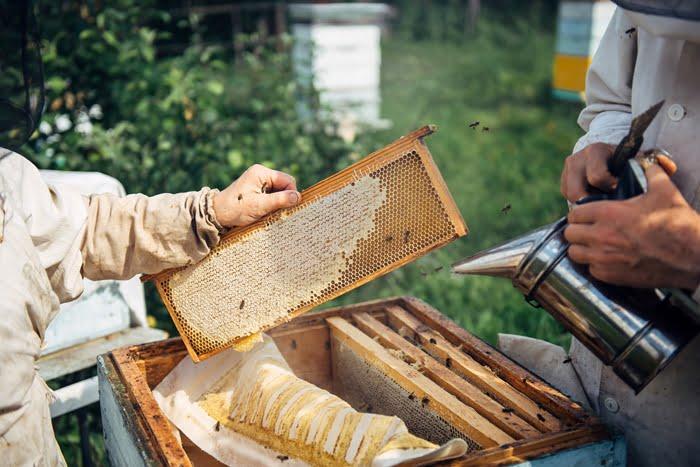 Iniciar uma criação de abelhas