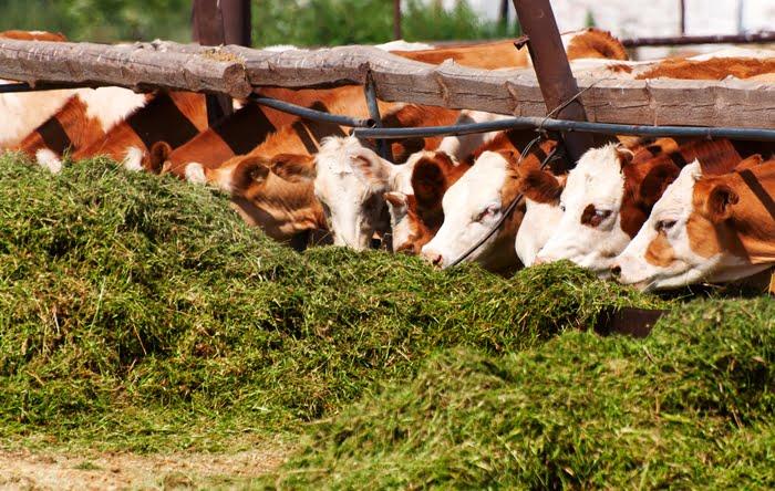 Negócio rural de produção de silagem