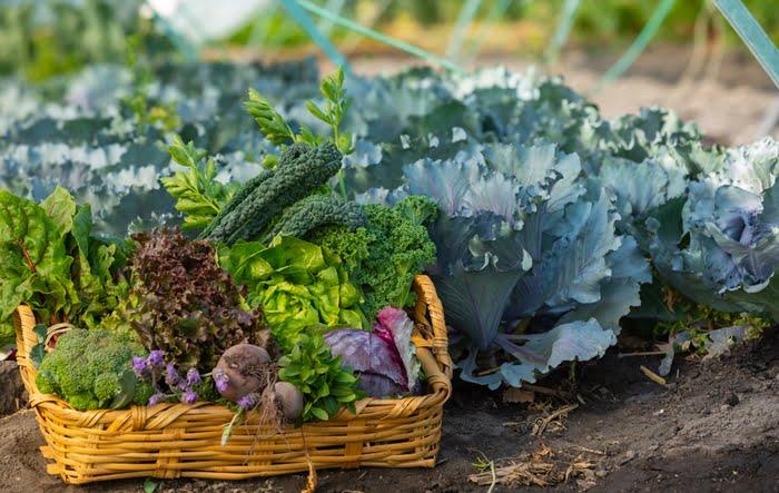 Plantação de hortas