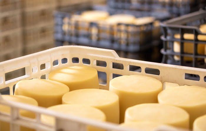 Produção de queijos na fazenda