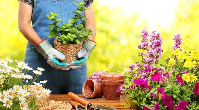 Fazer serviços de jardinagem