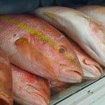 Peixaria delivery é a nova forma de vender peixes