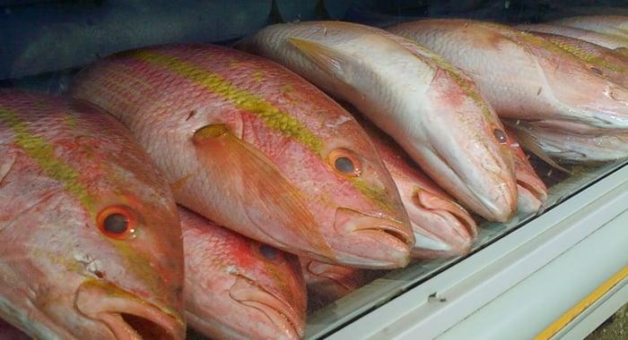 Resultado de imagem para peixe embalado