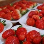 Plantação de morango: Como plantar morango para vender?
