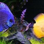 5 Fornecedores de peixes ornamentais