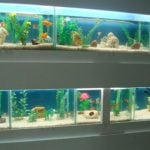 Como montar uma loja de peixes ornamentais