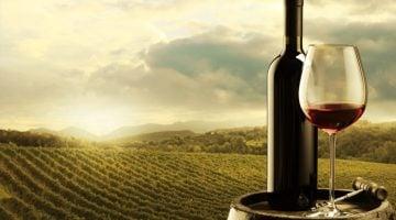 Como montar uma vinícola