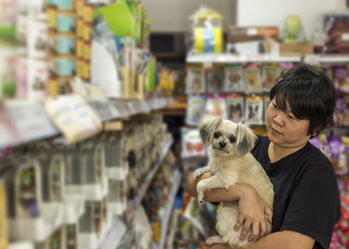 como abrir um pet shop