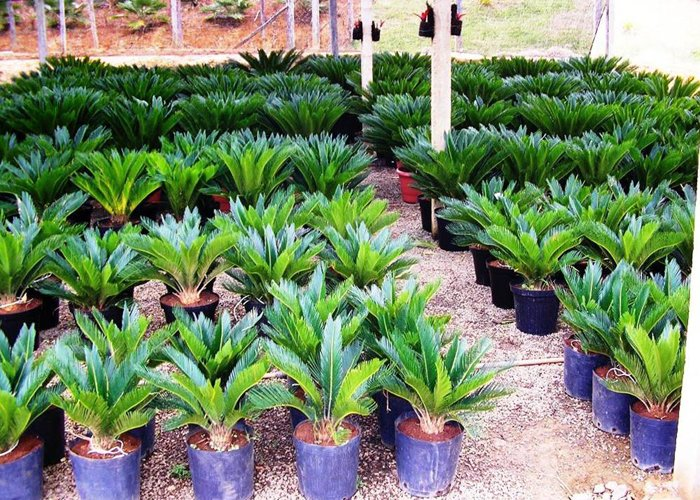 fazer mudas de plantas para vender