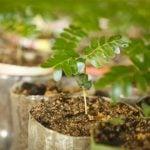 como fazer muda de plantas para vender
