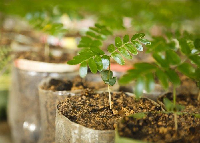 como fazer mudas de plantas para vender