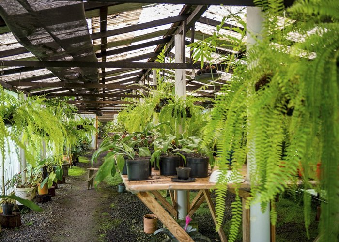 mudas de plantas para vender