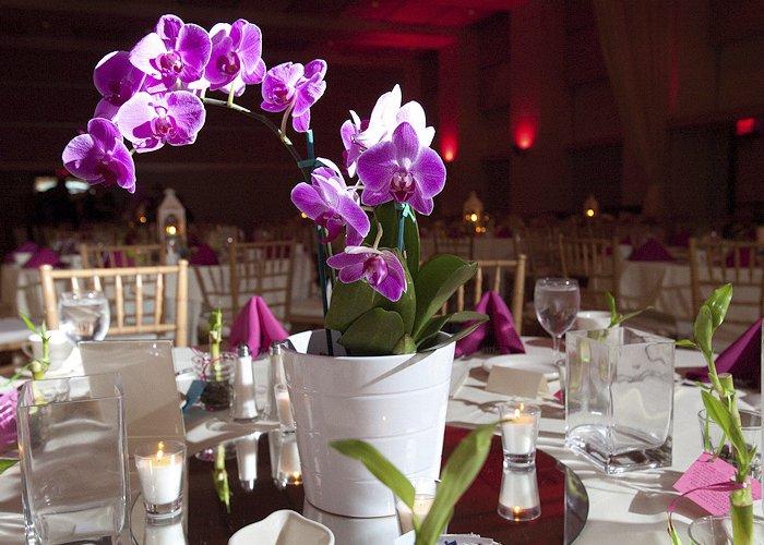 ganhar dinheiro cultivando orquídeas