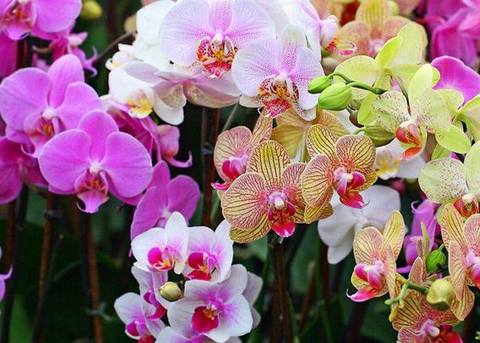 Como ganhar dinheiro cultivando orquídeas