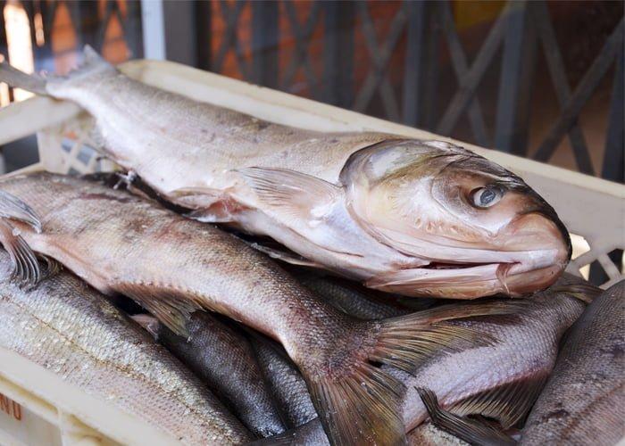 fornecedor de peixe