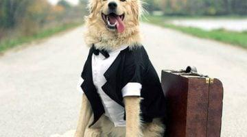 Como ganhar dinheiro com hospedagem de cães