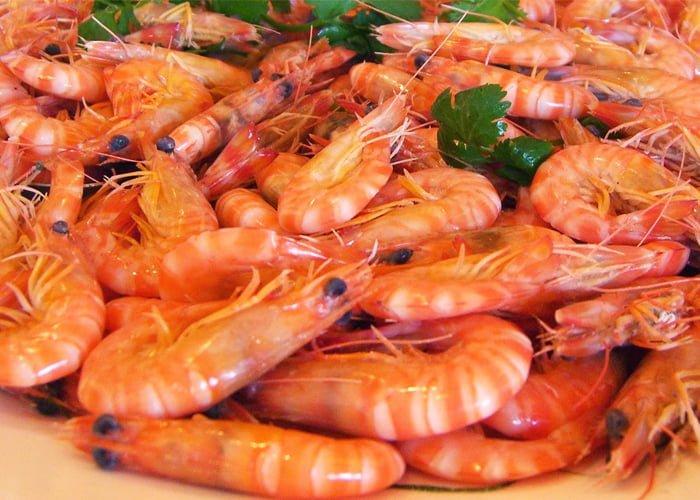 comprar camarão direto do produtor