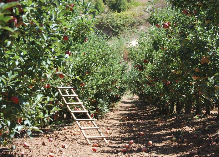 como fazer um pomar de frutas variadas