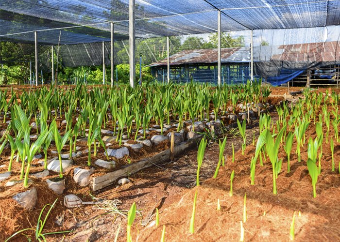 produção de mudas em viveiros