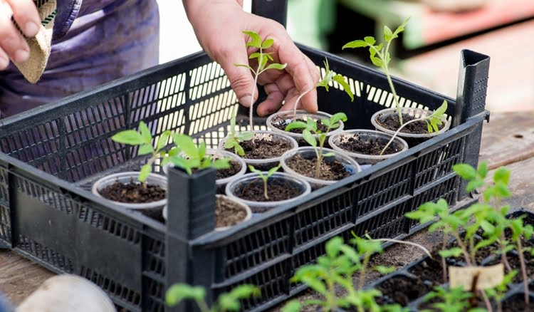cultive mudas de plantas