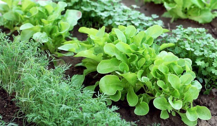 o que plantar em 1 hectare de terra