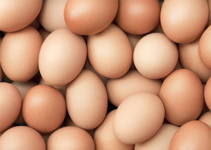 Vender ovo de galinha dá dinheiro