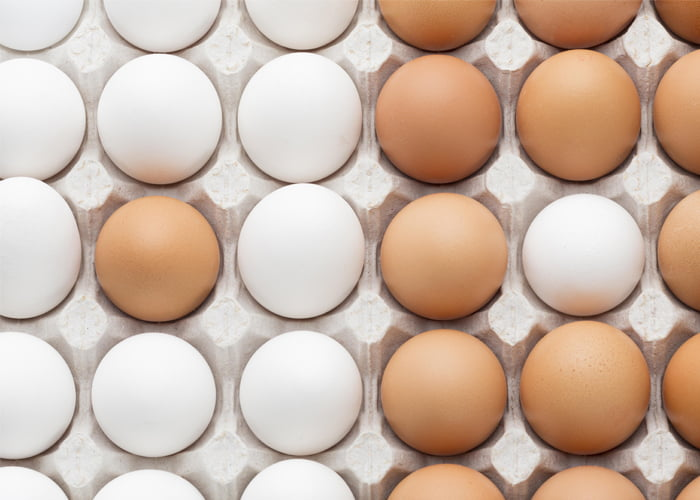 Vender ovo de galinha dá lucro