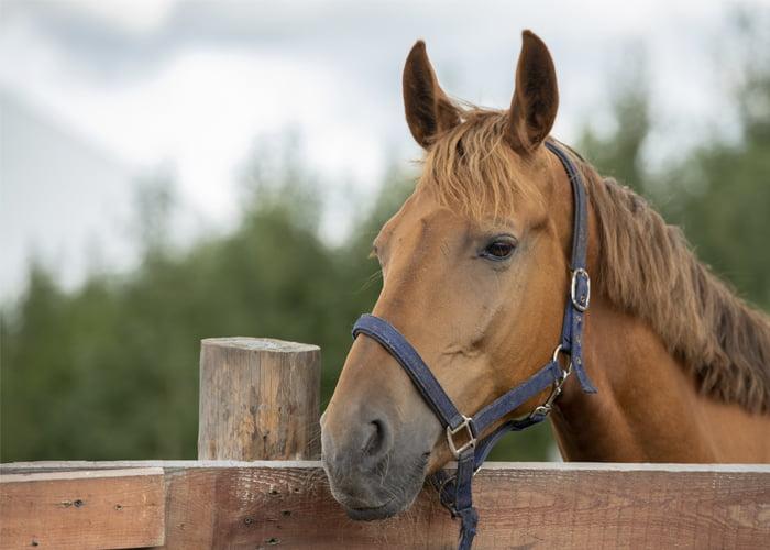 Como ganhar dinheiro com cavalos